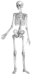 Anatomy and Biomechanics for Movement Professionals