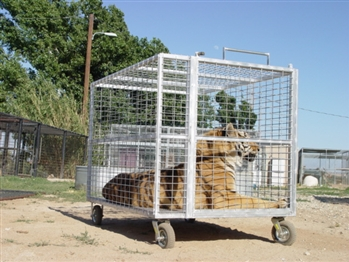 Exotic Animal Transport Cage ~ Order Online Today! ~ Free Shipping! *