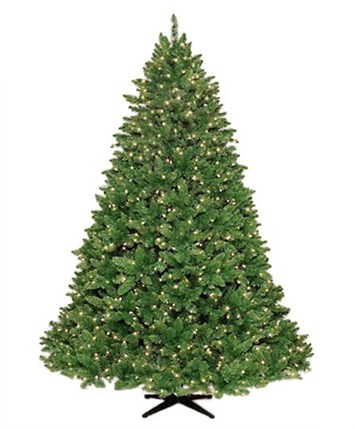 giant barrington deluxe fraser fir christmas trees