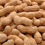Peanut Salted In Shell Bulk Nut