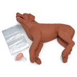 CPR Dog  | CPR Dog Manikin | CasPeR CPR Dog Manikin | CasPeR The CPR Dog Manikin | Simulaids CasPeR The CPR Dog Manikin 5000