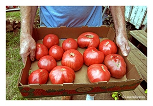 Fine Art Giclee Print - 'Box-o-'Maters'