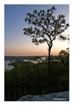 Fine Art Giclee Print - 'Longleaf Pine at Sunset'