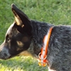 Biothane® Reflective Dog Collars for Sale!