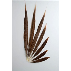 "Golden Pheasant Tails 10""-16"" Side"