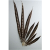 "Lady Amherst Pheasant Tails 16""-20"" Side"