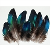 Peacock Mini Blue Wings