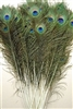 "Peacock Tails 30""-35"""