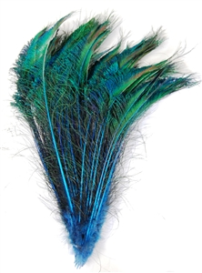 Peacock Swords Dyed Color 15-20""