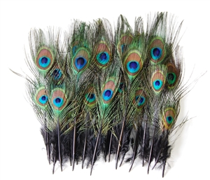 "Peacock Mini Tails 2""-9"" Dyed"