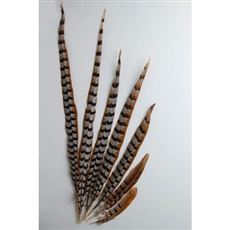 "Reeves Pheasant Tails 16""-20"""
