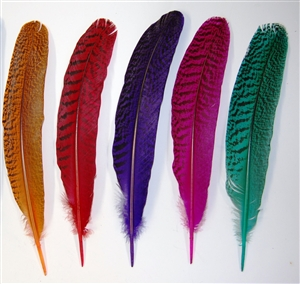 Peacock Quills - Dyed
