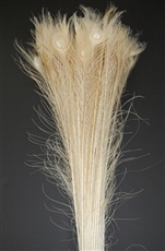 "Peacock Tails: Bleached White 30""-35"""
