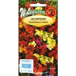 An attractive mixture of annual Wallflowers. Bushy erect plants with strong and pleasant fragrant flowers. Inflorescences in yellow, orange, purple and red colour are used for bedding and cutting.