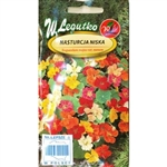 Strongly growing Nasturtium with spreading stems and numerous flowers in yellow, orange and scarlet colours. Very popular for bowers covering, fences and balconies sometimes as cut flowers.