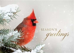 Holiday Cardinal - Holiday Greeting Card