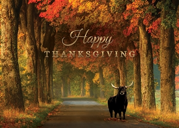 Fall Thanksgiving Bull Card