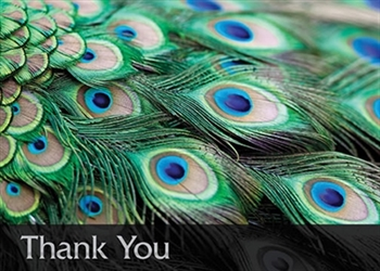Peacock Feathers Thank You Card