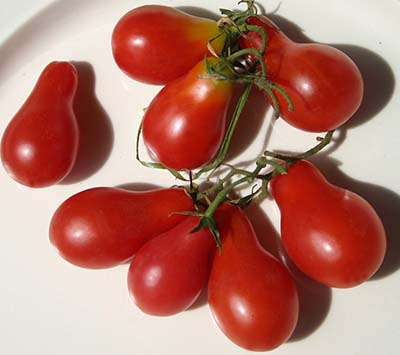 Austin's Red Pear-Tomato Seeds