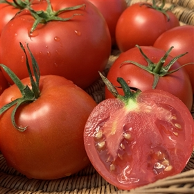 Backa - Heirloom Tomato