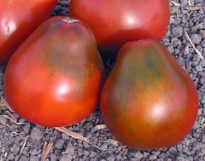 Black Pear Heirloom Tomato
