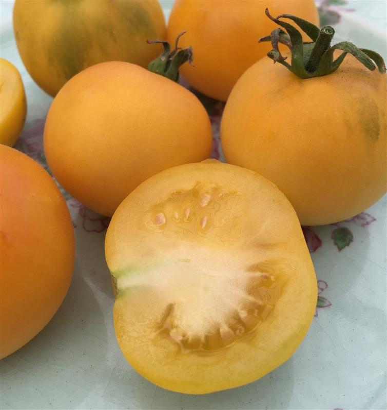 Garden Peach Organic Tomato Seeds TomatoFest