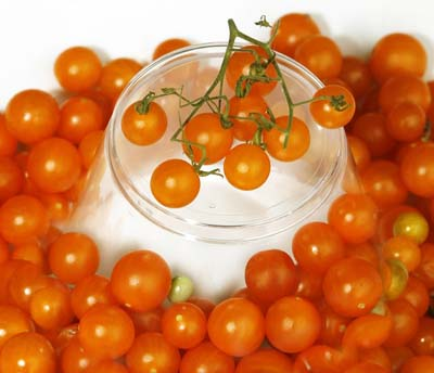 Gold Rush Currant Tomato
