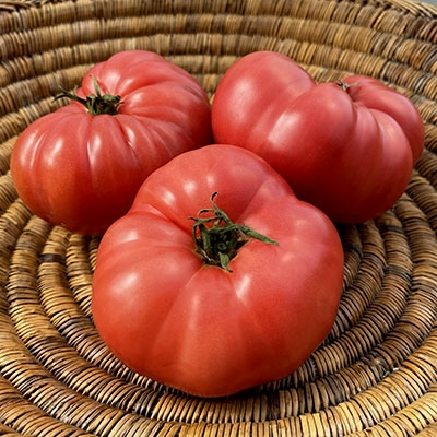 Granny Cantrell's German Pink Tomato