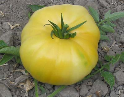 Lenny & Gracie's Kentucky Heirloom