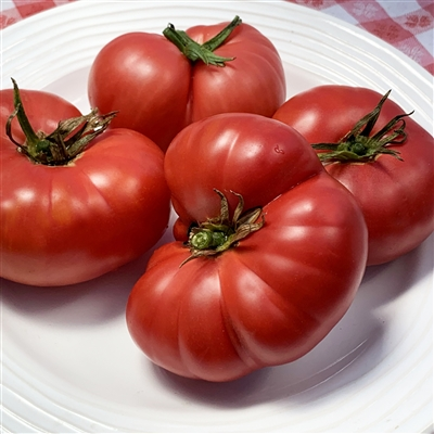 Lilac Giant-Tomato Seeds