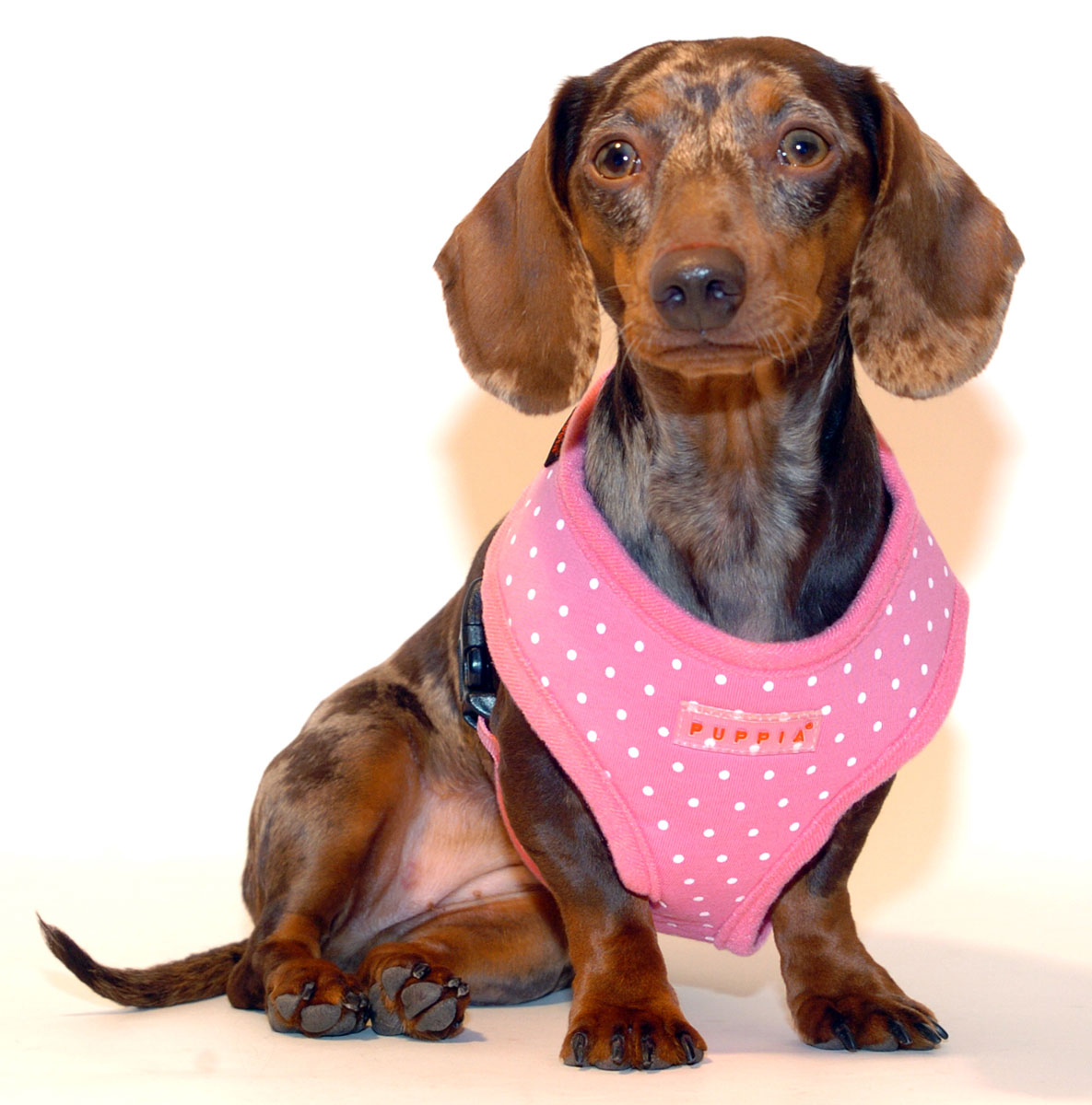dachshund harness mesh dog mesh harness elsavadorla. Black Bedroom Furniture Sets. Home Design Ideas
