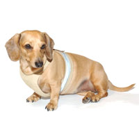 Safari Khaki Easy-Go Never-Choke Dachshund Harness