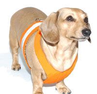 Tangerine Orange Easy-Go Never-Choke Dachshund Harness