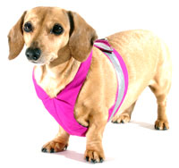 Magenta Easy-Go Never-Choke Dachshund Harness