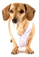 Reversible Lots of Love Easy-Go Never-Choke Dachshund Harness