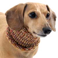 Marled Pumpkin Spice Noodle Boodle Dachshund Neck Warmer