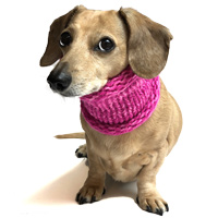 Marled Fuschia Pink Noodle Boodle Dachshund Neck Warmer