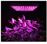 48w LED Plant Grow Light Red Blue Growing Panel