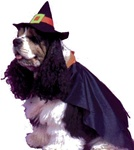 Witch Pet Halloween Costume