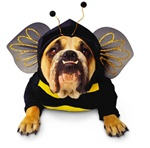 Zelda Bee Pet Halloween Costume