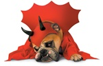 Zelda Devil Pet Halloween Costume