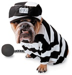Zelda Prisoner Pet Halloween Costume