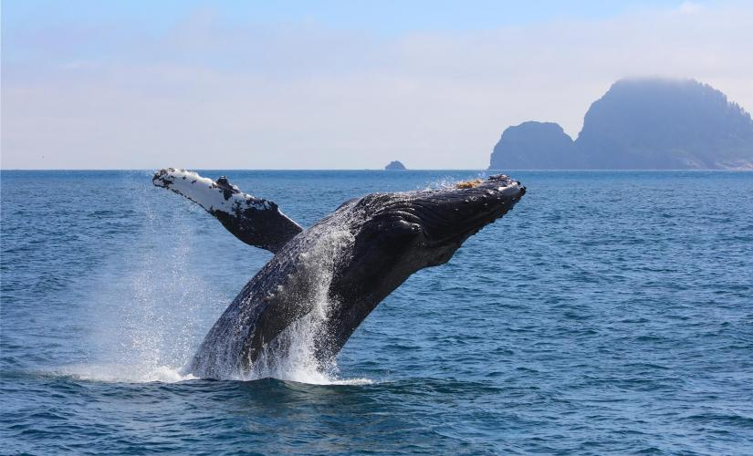Southeast Alaska Private Whale Watching Cruise Tour in Juneau
