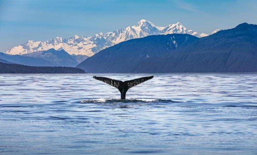 Whale Watching Day Tour in Juneau, Alaska