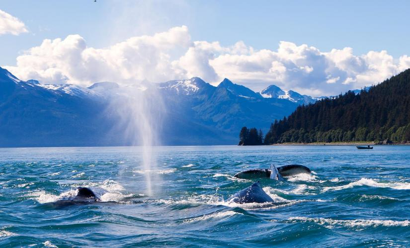 Exclusive Whale Watching Cruise in Juneau, Southeast Alaska