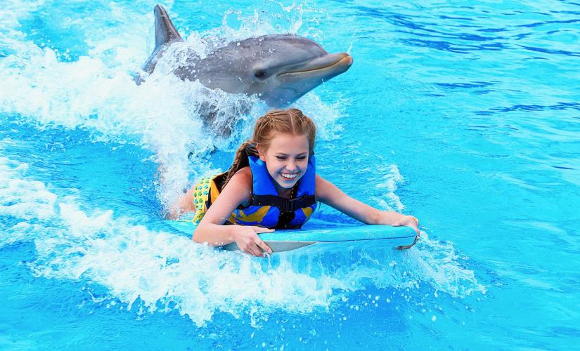 Caribbean Turtle Farm and Dolphin Swim Adventure in Grand Cayman