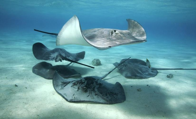 Caribbean Stingray City by Jetski and Starfish Beach in Grand Cayman (North Sound)