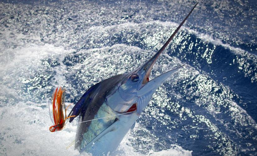 Private Full Day Deep Sea Fishing Charter Tour in Grand Cayman