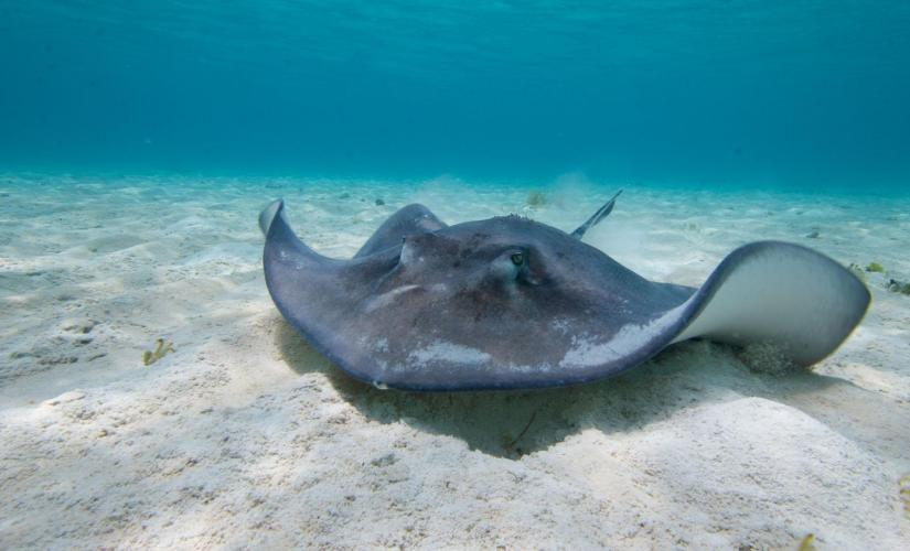 Exclusive Half Day Stingray City and Snorkel in Grand Cayman (Barrier Reef, Coral Gardens)