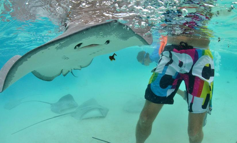 Stingray City Tour and Snorkeling in Grand Cayman (Coral Gardens)
